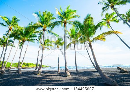 Bright green fronds of palms shadow stoney beach below under blue sky with retro effect