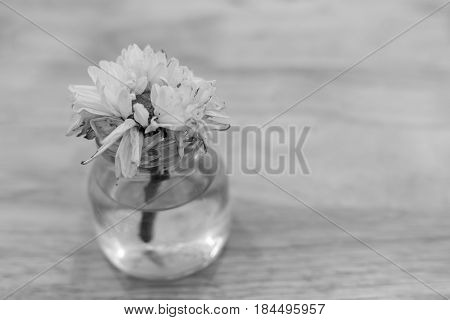 wither white flower in glass bottle with water black and white tone selective focus