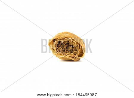 Dried White Rose On White Background
