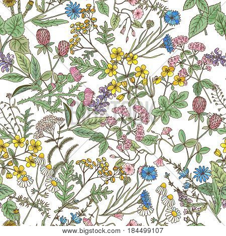 Hand drawn herbs background. Vector seamless pattern. Background with botanical blossom plant, illustration of seamless background with herb branch