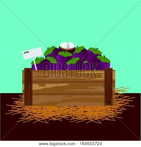 mangosteen in a wooden crate Vector illustration.