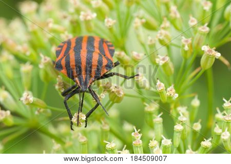 Species of testaceous beetle sitting on his own plant.