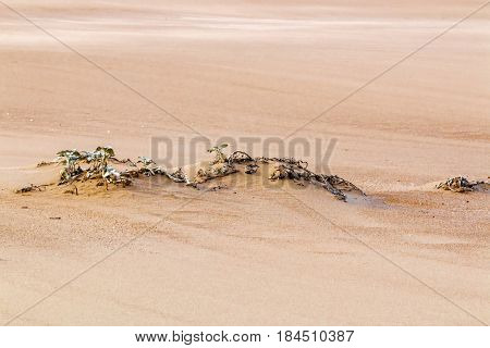 Withered Dune Vegetation On Patterns And Textures Of Beach Sand