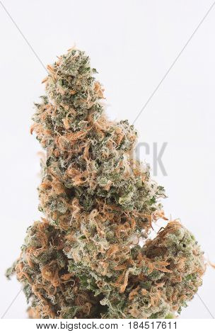 Detail of dried cannabis bud (Green Crack strain) isolated over white background with visible trichomes