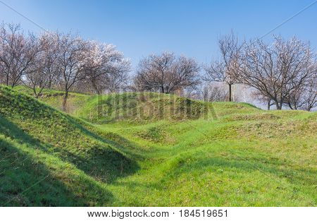 Landscape with flowering orchard on a hill in Ukraine