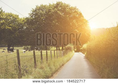beautiful English country lane at sunset
