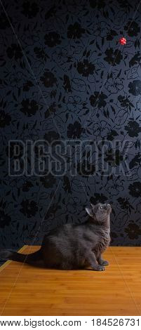 Russian Blue Cat beautiful cat portrait emotion happiness fluffy