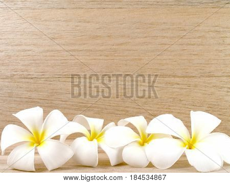close up group of white plumeria or frangipani flowers on wooden table floor and wall, tropical flowers are scented and bloom in summer for home or Asian style spa decor