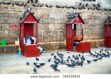 The Old Man Sells Wheat Grain To Feed The Pigeons Near New Mosque. Istanbul