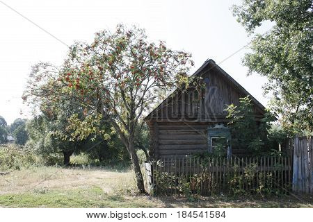 Traditional russian village house. Nature. Summer. Countryside.