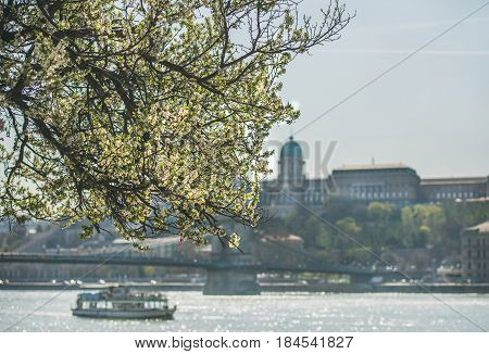 Blooming tree at Danube Pest embankment in Budapest, Buda castle and Danube river at background on sunny spring day