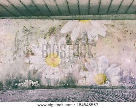 Photomontage of a weathered wall with wallflower daisy.