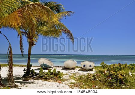 Boats and palm tree provide a scenic view of the Caribbean Sea in Costa Maya.