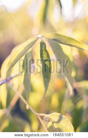 Sunny autumn day in garden. Green leaves selective focus phootography