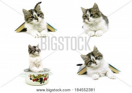 beautiful fluffy kitten isolated on white background close-up. horizontal photo.