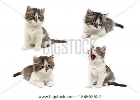 Little fluffy kitten on a white background. Horizontal photo.