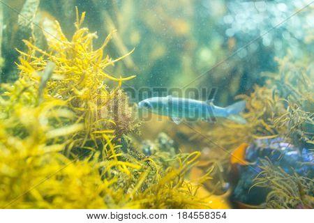 Coral Reef and Tropical Fish in Aquarium