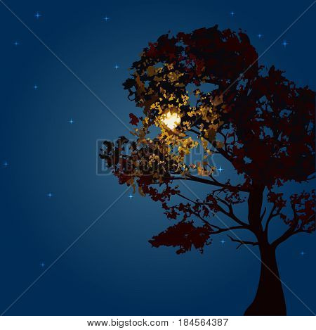 Autumn tree on a background lunar night and the starry sky. Vector illustration. Square location. A tree bathed in moonlight.