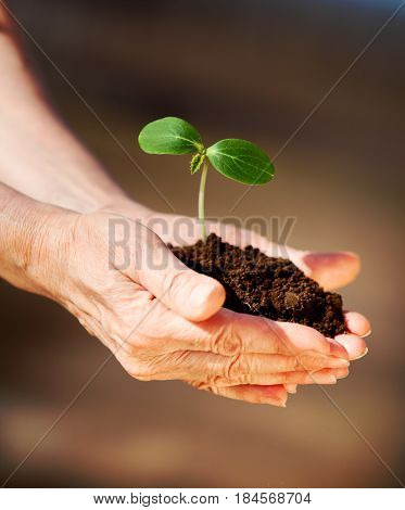 Human hands holding green small plant with ground