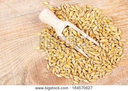 Barley Grain Or Seeds Closeup.