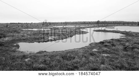 Nature bog view in wetlands black and white
