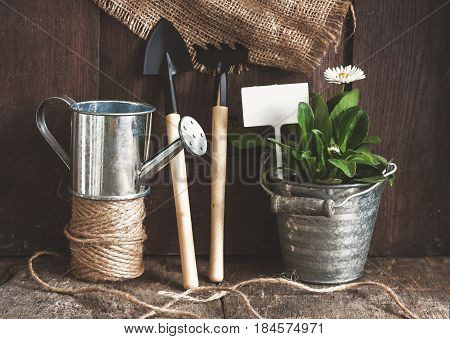 Garden tool, shovel, rake, watering can, bucket, tablets for plants, flower daisy in a flower pot on a wooden old brown background, close-up. Concept of gardening.