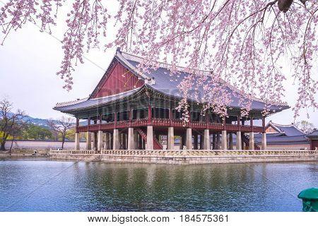 Gyeongbokgung Palace And Cherry Blossom  In Spring, Korea.
