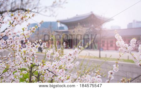 Cherry Blossom At Gyeongbokgung Palace In Spring, South Korea.