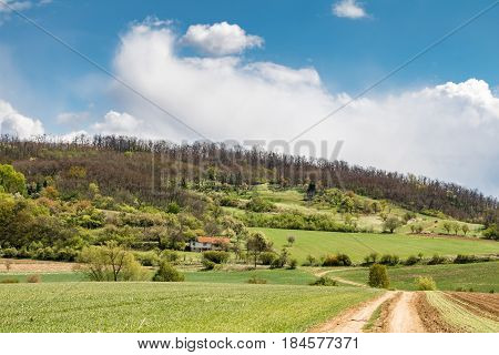 Spring Countryside With Dirt Road Through Green Meadows