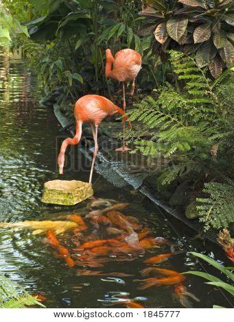 Flamingos And Fish
