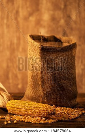 Harvested corn maize cob and grains selective focus
