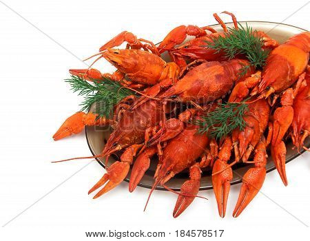 Boiled crayfish with dill on white background. Horizontal photo.