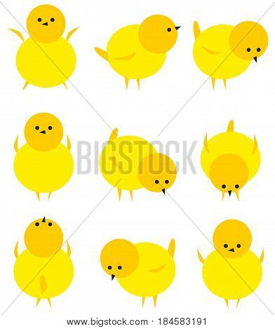 Baby yellow chicken isolated on white icon set. Adorable nature pets yellow chicken bird character funny farm livestock newborn animal. Fluffy cartoon little hen spring chicken small chick baby chuck.