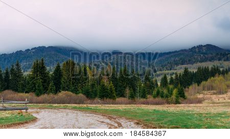 Carpathian Mountains. Landscape with firs on a cloudy day. Ukraine.