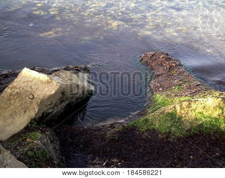 Sea rocks covered with seaweed and backwater