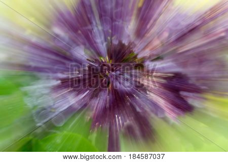 Dramatic explosion blur of lilac flower with zooming effect