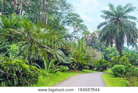 The Walk In Cycad Garden