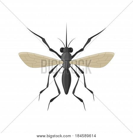 Mosquito icon isolated on white background. A stinging, biting, annoying insect. Cartoon black mosquito insect view from above.