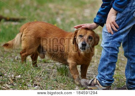 the child caresses a dog on the head