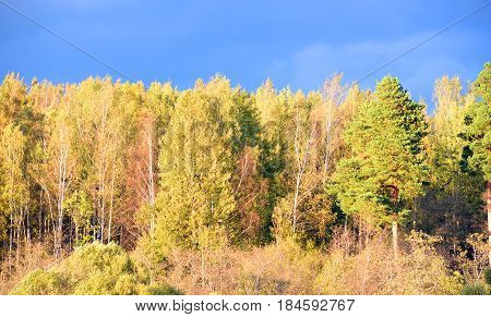 Early autumn forest at sunny evening Russia.