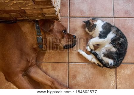 Close up two pets cat and dog lying on beige tiled floor