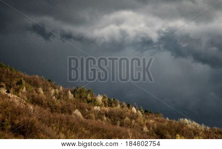 Contrasty scene in nature - coniferous and bare broadleaved trees are lit by yellow light during golden hour, heavy overcast on dark sky before storm. Autumn colors