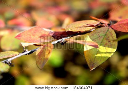 autumn forest, autumn leaves, colorful background, red and yellow leaves