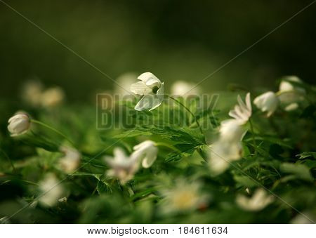 Blossoming glade of flowers in a green spring forest in the sunlight