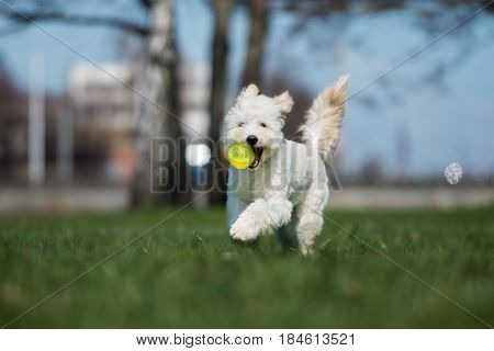 happy mixed breed dog playing with a ball outdoors