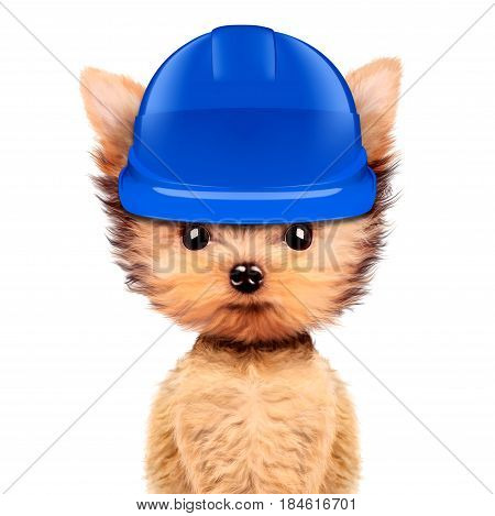 Funny dog in blue hard hat Isolated on white background. Concepts for web banners, web sites. Fixing computer and repair center concept with cute dog. 3D illustration with clipping path
