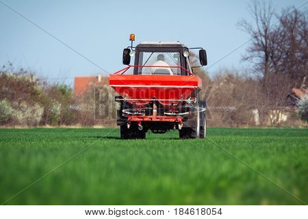 Tractor fertilizing in green wheat field on the blue sky