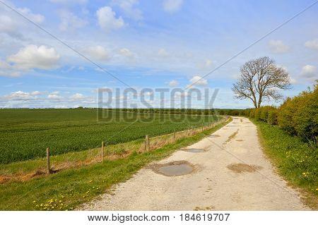 Limestone Farm Track