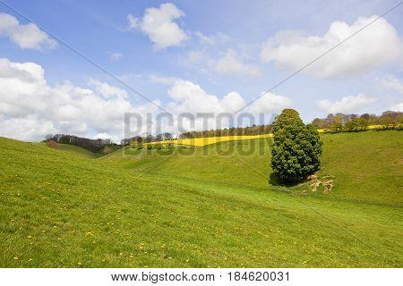 Green Valley In Springtime