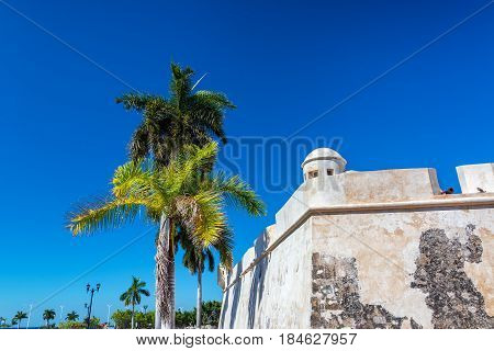 Defensive Wall And Palm Tree
